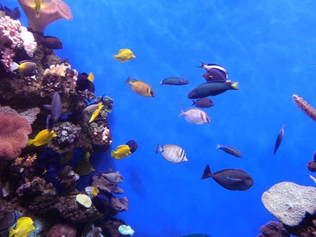 If its raining, why not visit Palma Aquarium?